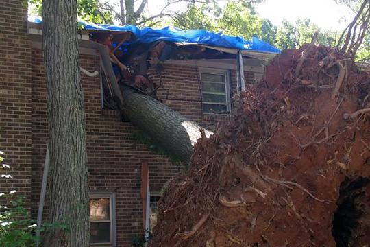Tree Fall Property Line  Property Line Tree Damage