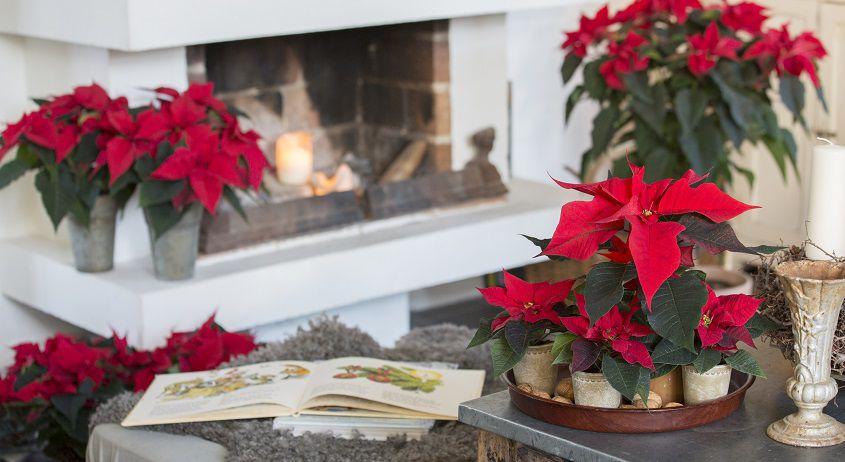Stelle Di Natale Immagini.Idee Fai Da Te Per Natale Le Corone Di Stelle Di Natale