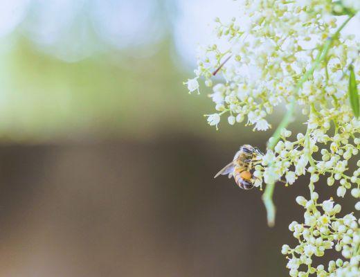 come allontanare vespe casa