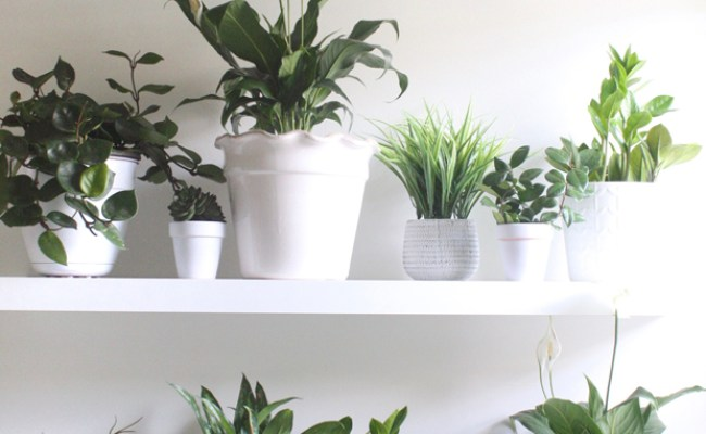 Plant Wall In The Bathroom House Mix
