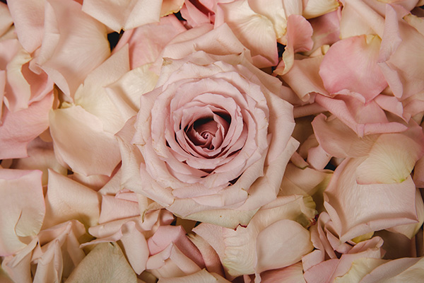 Roses at House of Asante Spa