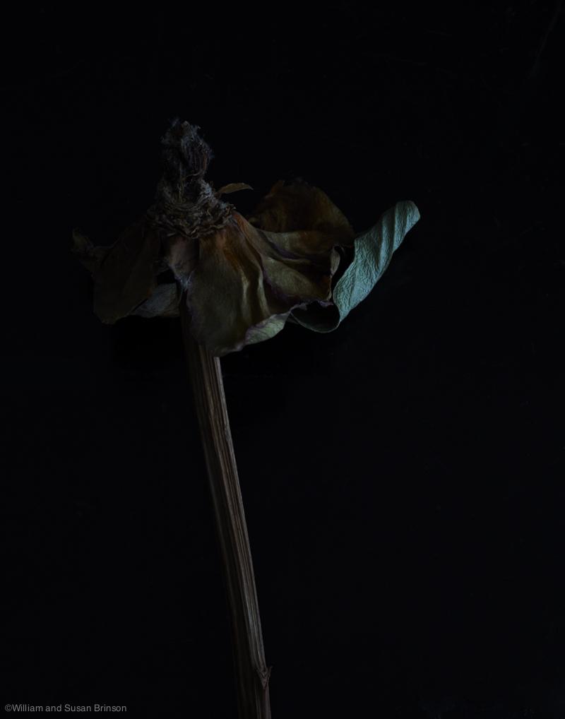 HOB_Masculine_Flower