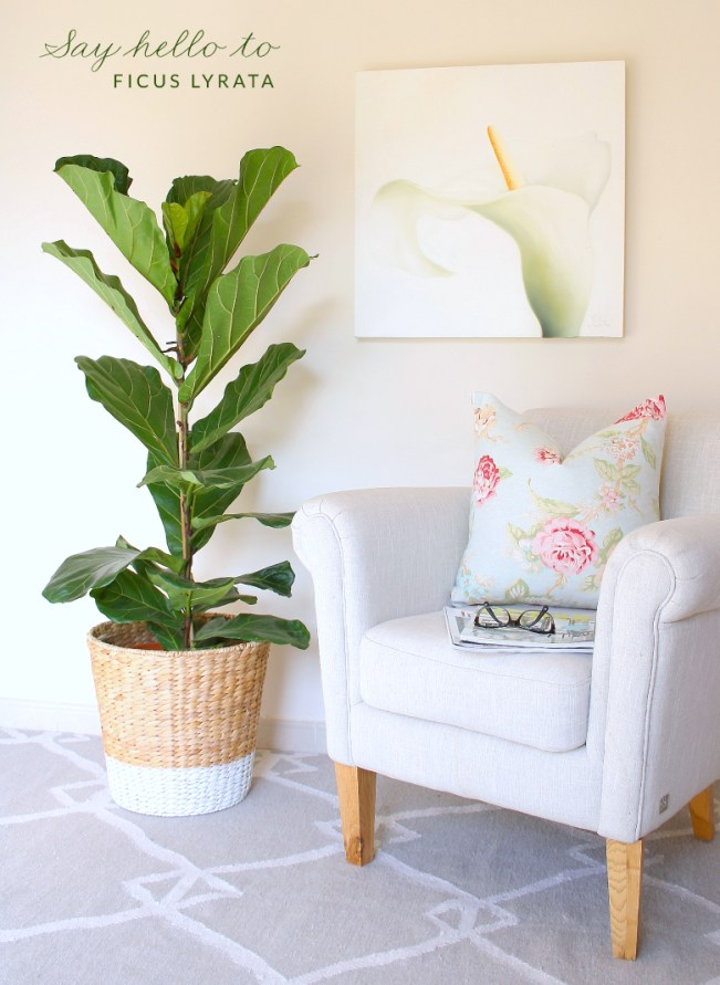 DIY-planter-fiddle-leaf-fig-tree