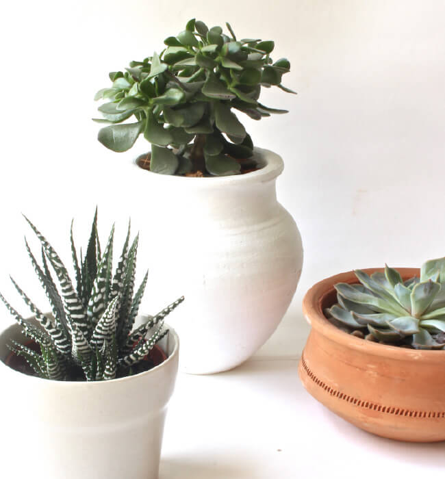 Succulents // the perfect house plants