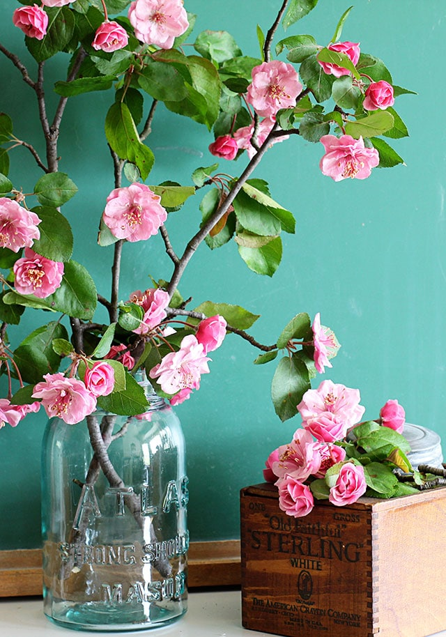 Late Fall Wallpaper Nature How To Force Flowering Branches Indoors House Of Hawthornes