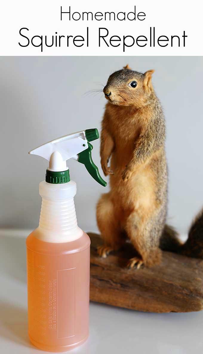 Homemade Squirrel Repellent Recipe  House of Hawthornes