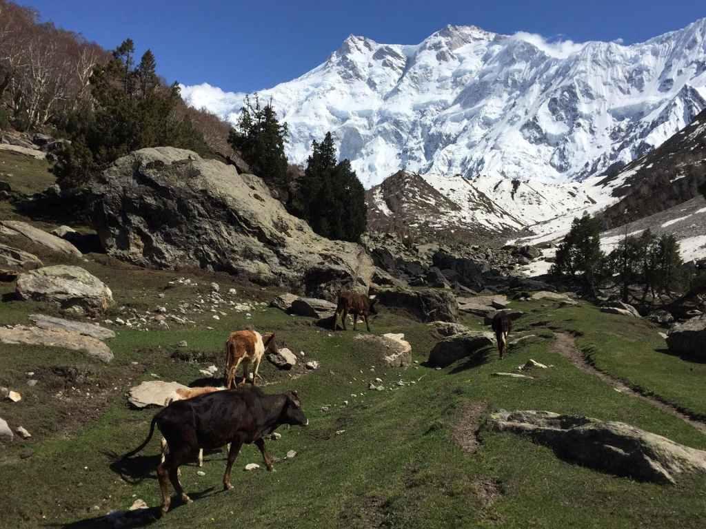 travel, travelling, tourist, Pakistan, Gilgit, Swat, Kaghan, Naran, Hunza