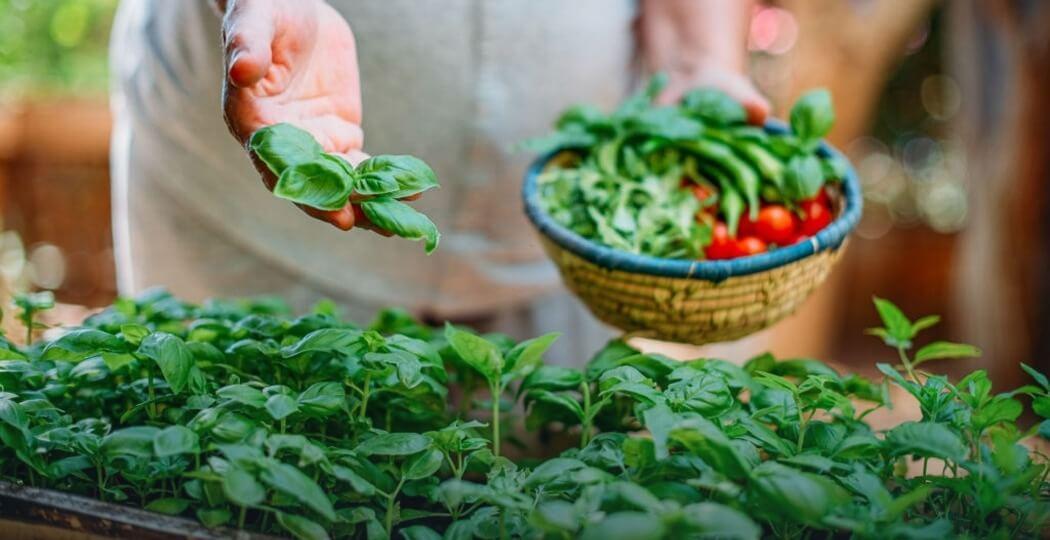 plant seeds, Vegetable seeds, Fruit seeds