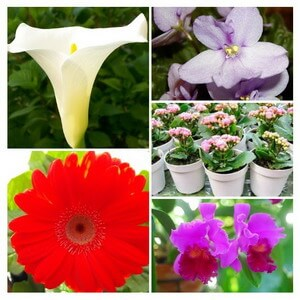 flowering plant collage