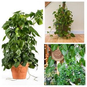collage of trailing and climbing type house plants