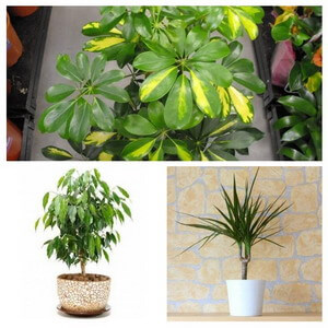 collage of indoor trees
