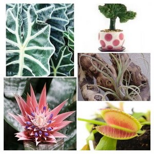 various unusual plants collage