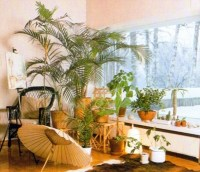 Indoor Plants For A South