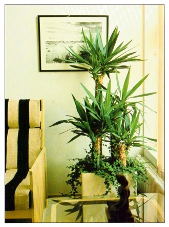 Large And Tall Indoor Plants