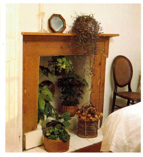 Best Hanging House Plants