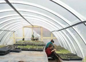 greenhouses-at-finca-tres-robles-2