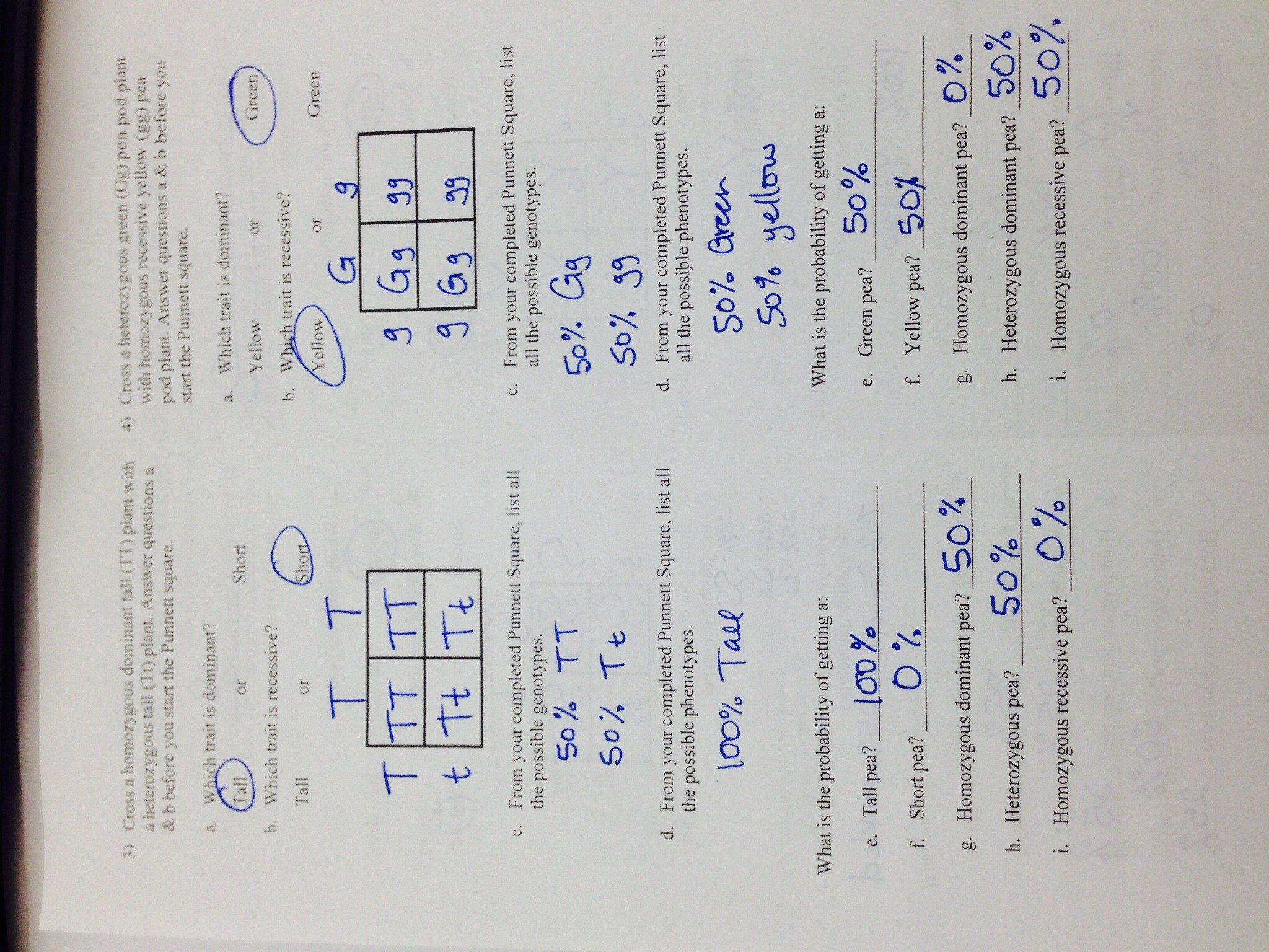 Mendel S Work Worksheets Answers
