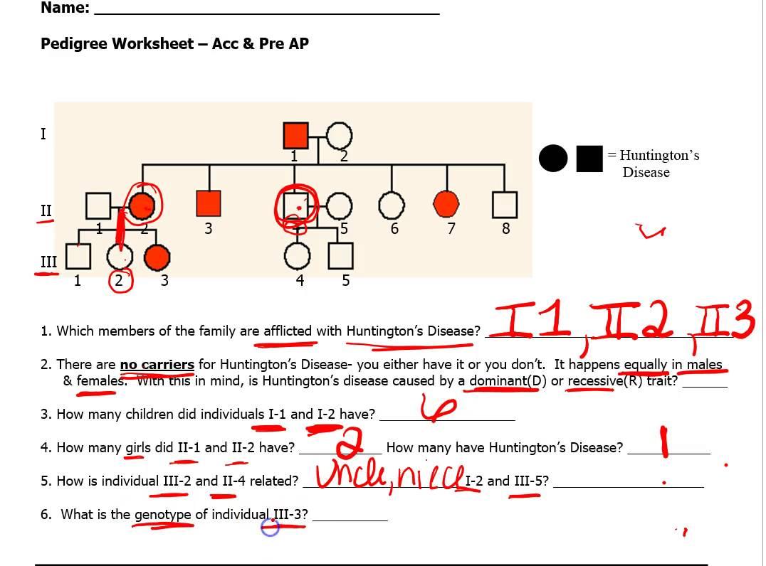Pedigree Worksheet Biology Free Worksheets Samples