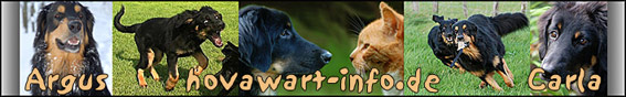 © www.hovawart-info.de