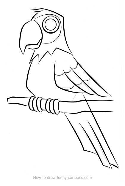Parrot drawing (Sketching + vector)