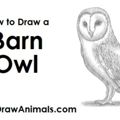 Diagram Turtle S Head 4 Way Light Switch Wiring Uk How To Draw A Barn Owl