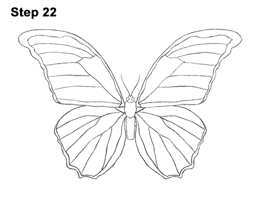 How to Draw a Butterfly (Blue Morpho)