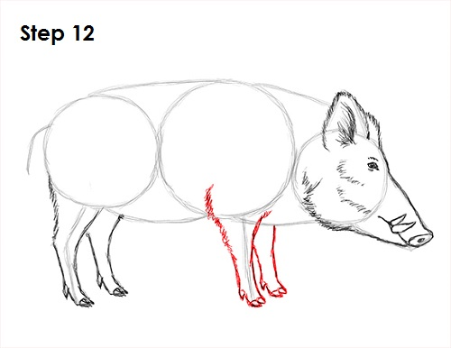 How to Draw a Boar