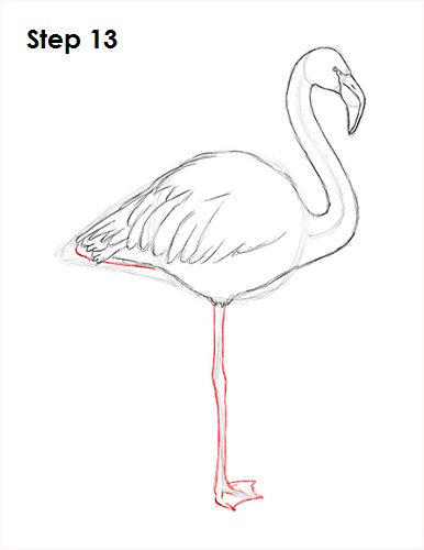 How to Draw a Flamingo VIDEO & Step-by-Step Pictures