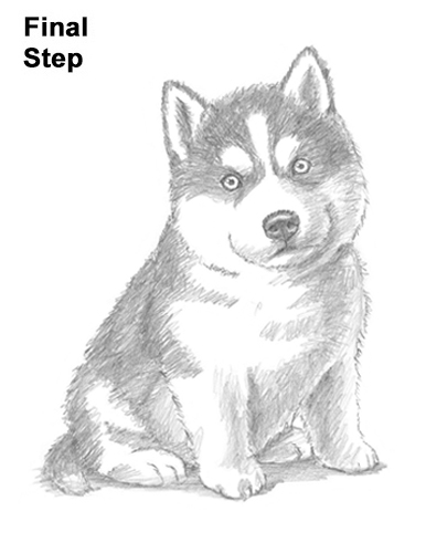 How to Draw a Puppy (Husky) VIDEO & Step-by-Step Pictures