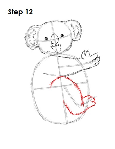How To Draw A Koala Head