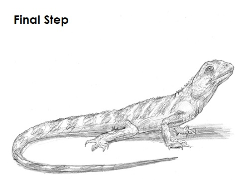 How to Draw a Lizard VIDEO & Step-by-Step Pictures