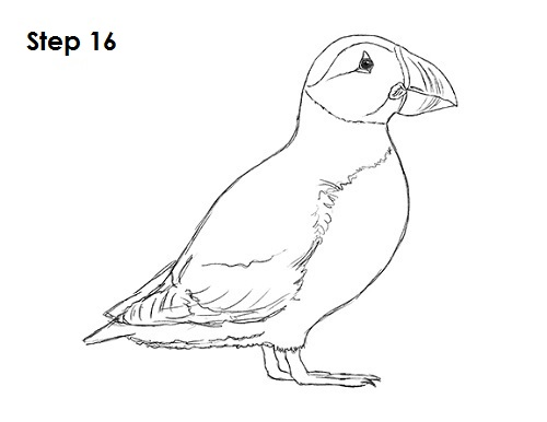 How to Draw a Puffin