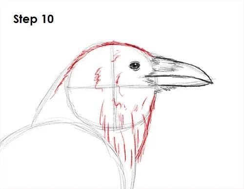 Draw Raven Bird 10