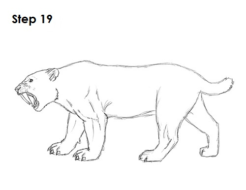 How to Draw a Smilodon (Saber-Tooth Tiger)