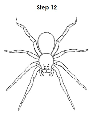 How to Draw a Spider VIDEO & Step-by-Step Pictures