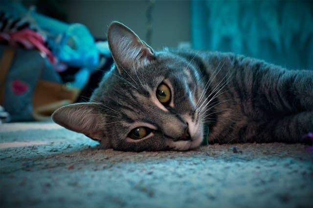 Cat Grooming Tips