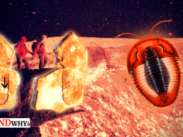 trilobite human footprint
