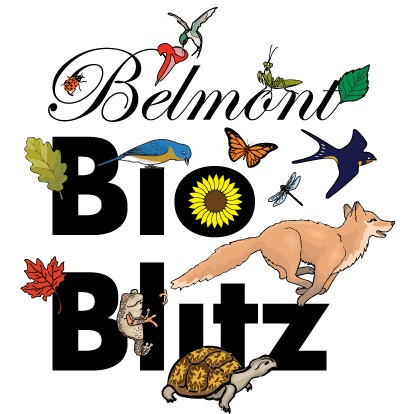 Visit our iNaturalist project: https://www.inaturalist.org/projects/belmontbioblitz