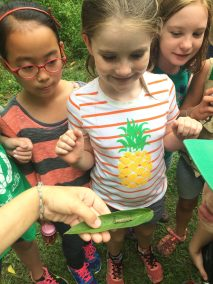 Howard County Conservancy campers take care of monarchs from egg to adult. Citizen Science programs are part of Summer Nature Day Camps.