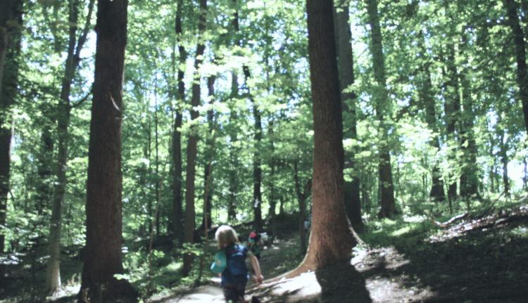 The Sensibilities of Trees