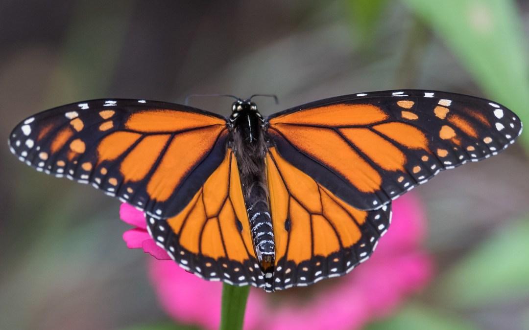 Postponed: today's Nature in your neighborhood program