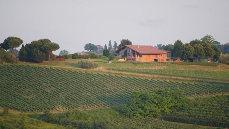 Vineyards and olive groves near Rimini with soft sunset light