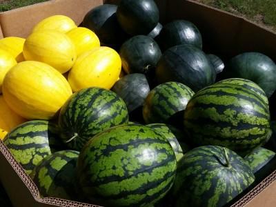 ontario farm watermelon and cantaloupe