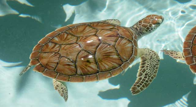 Interesting Facts about Turtles