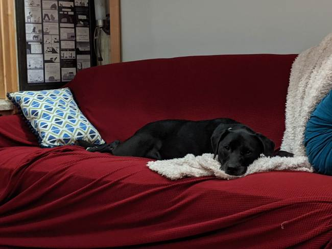 A black dog lounging on our RV couch