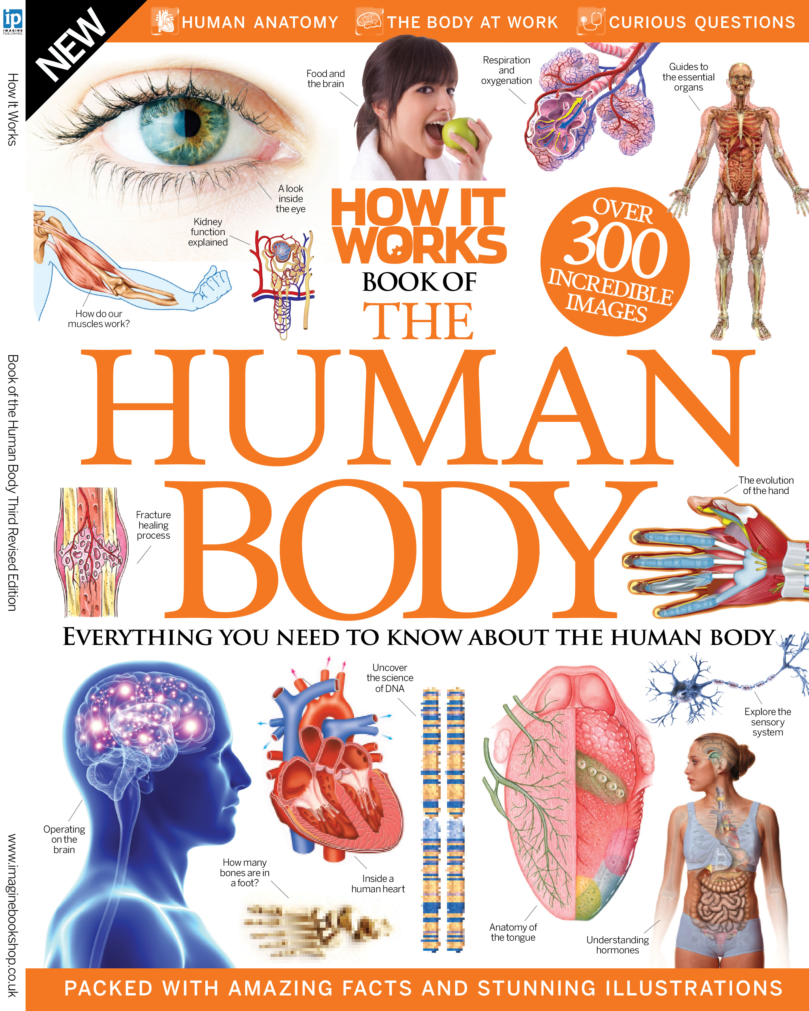 The How It Works Book Of The Human Body Uncovers The