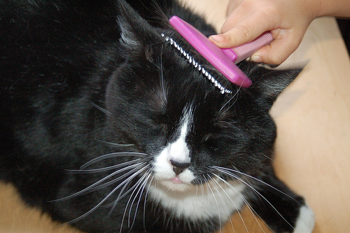 How Much Does Cat Grooming Cost  HowMuchIsItorg
