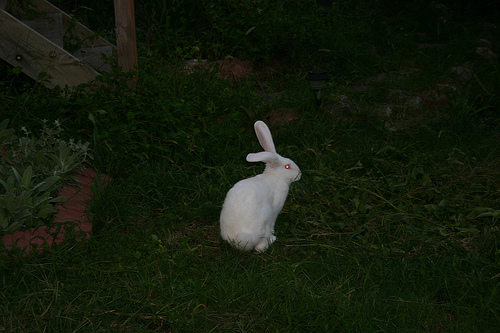 How Much Does a Flemish Giant Rabbit Cost  HowMuchIsItorg