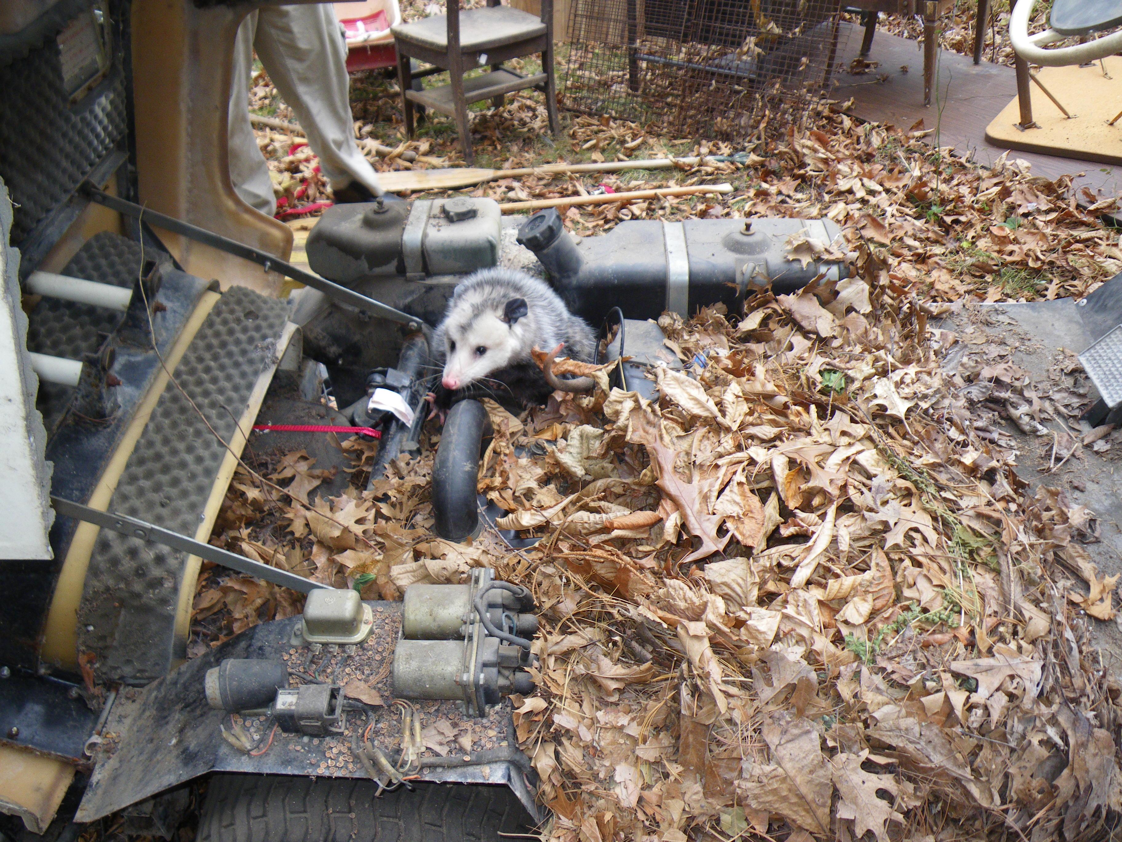 Yamaha G9 Gas Golf Cart Wiring Diagram Yamaha G1 Restoration Project
