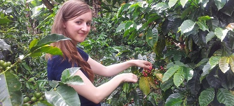 Coffee picking 2